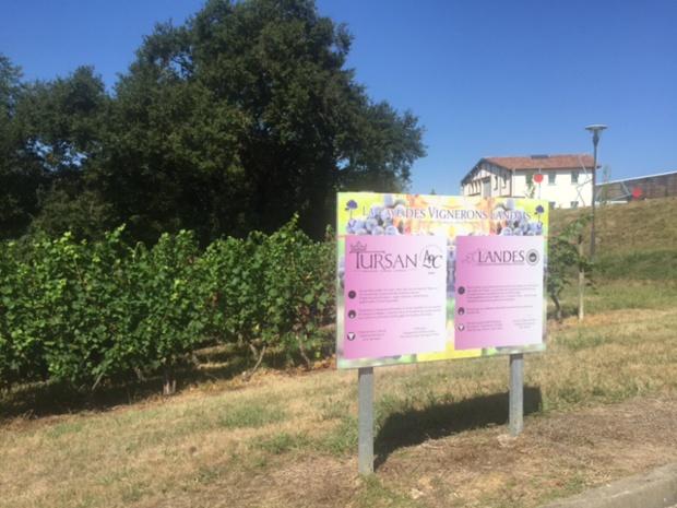 Vignobles-Caves des vignerons landais