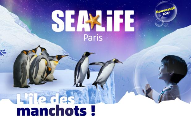 L'Ile des manchots accueillera une vingtaine de manchots antarctiques nés en captivité - DR : SEALIFE Paris