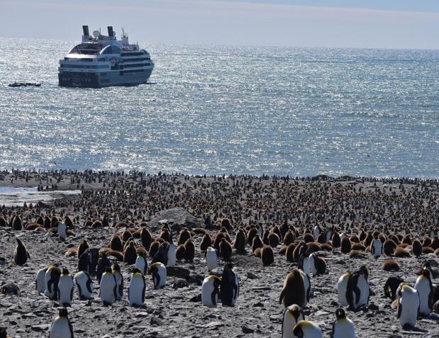 Laissant les Malouines à tribord, nous mettons le cap sur les îles subantarctiques de Géorgie du Sud - DR : C. Pérot