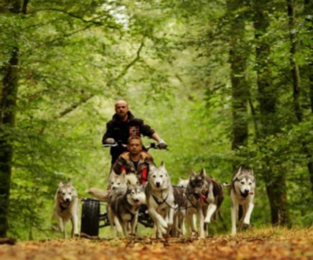 Le cani-rando consiste à se faire tirer en traîneau à roues (cani-kart) par une dizaine de chiens dans la forêt - @Elisa Pirat