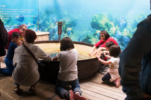 Dans le nouvel Espace Aventure de la ferme aux crocodiles, les jeunes explorateurs apprennent en s'amusant. Bassin tactile © Ferme aux Crocodiles