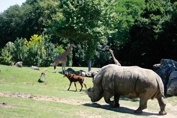 """La """"savane africaine"""" réalisée au ZooParc de Beauval - DR : ZP Beauval"""