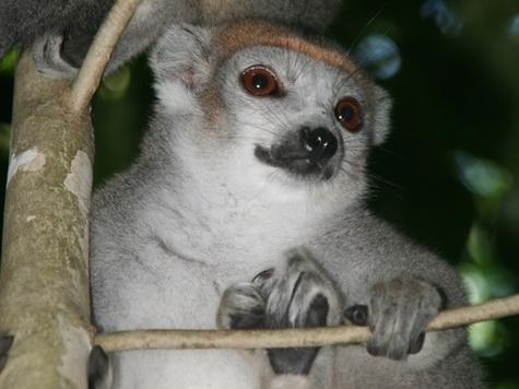 """Madagascar """" réouverte"""" au tourisme sur l'ensemble du territoire"""