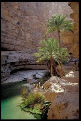 Les paysages sauvages du Sultanat d'Oman sont parmi les plus beaux des Emirats
