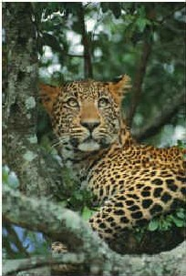 African S. Club : 15 jours en Hôtel Club + 2 jours de safari à... 850 Euros ttc !