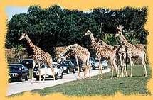 La piste Safari