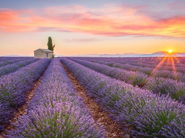 Le plateau de Valensole, en Provence, est l'un des sites touristiques les plus prisés par les voyageurs chinois en France - Photo : © ronnybas-Fotolia.com