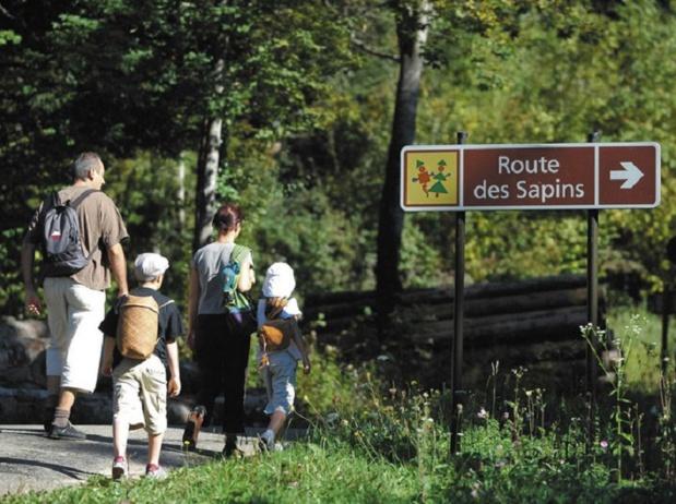 Plusieurs aménagements ont été réalisés à travers la forêt pour éclairer le visiteur - Copyright : Michel Joly/CDT Jura