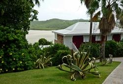 II - Martinique : dans l'île « debout » seuls plient les cocotiers...