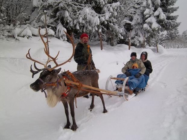 Partez sur les traces du Père Noël en traîneau à renne Photo: OT Kaysersberg
