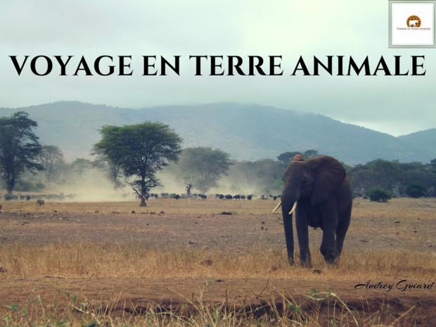 Repenser le tourisme pour la pérennité de la nature. Photo: Audrey Guiard
