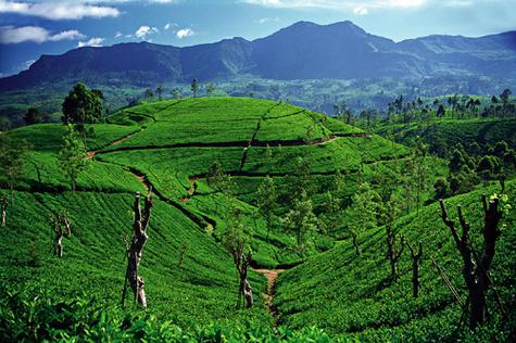 Sri Lanka : nombre de Français en hausse de 54% en 2009
