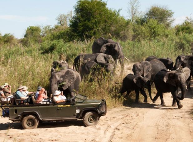 Makutsi safari springs en Afrique du Sud
