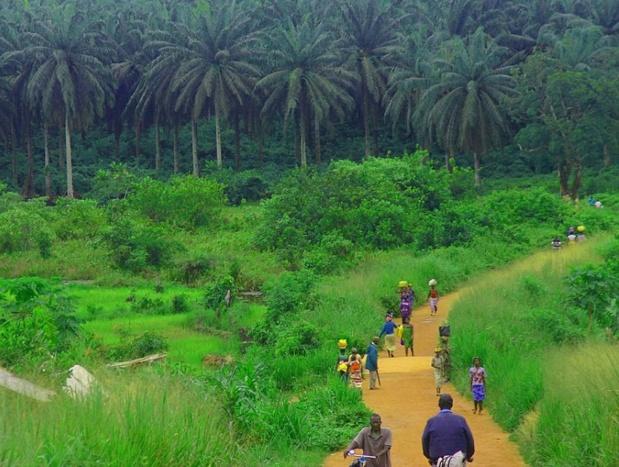 L'ambition de la Sierra Leone est d'être clairement identifiée comme l'une des destinations africaines de l'écotourisme. Ici, la route entre Kenema et Kailahun - DR : LindsayStark