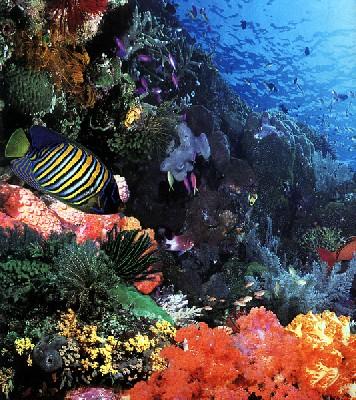 Les plus beaux fonds marins avec Ultramarina
