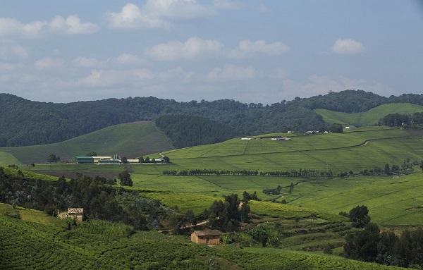 Surnommé le pays aux 1000 collines, le Rwanda tente d'attirer les touristes et développer l'économie locale - Crédit photo : Compte Twitter @RwandaGov