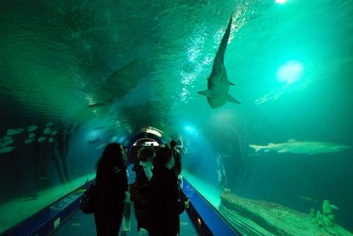 Le plus grand complexe océanographique du monde (aquariums, delphinarium) est à Valence