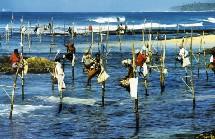 En achetant un séjour pour le Sri Lanka dès à présent et jusqu'au 15 septembre 2005, le voyageur ne paye que la moitié du prix pour la personne l'accompagnant.