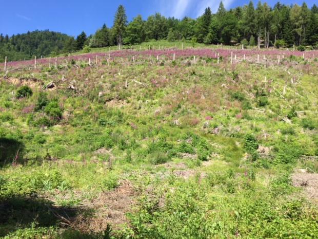 Le terrain acquis par Michel Jolidon sur lequel il va planter 6000 arbres - Photo Nouveaux Espaces