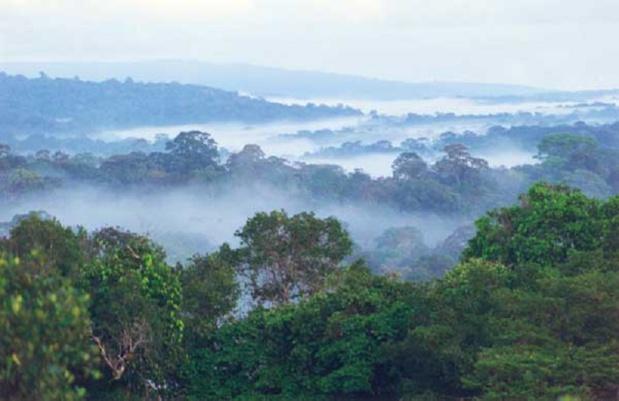 Guyane française - savane roche virginie - DR Delorme / wikicommons