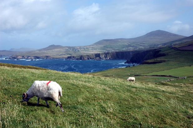 En France, 40% des réservations pour l'Irlande se font entre janvier et mars - Photo CE