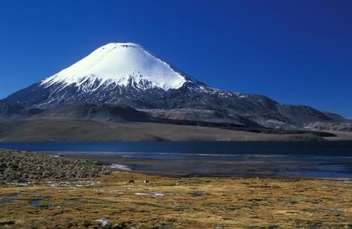 Le Lago Chungará au nord du Chili