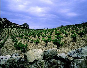 Creative Tours : Programme unique de 5 jours - 4 nuits - Partez sur le route des Vins Chypriotes !