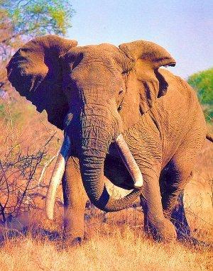 Savanna Tours & Safaris propose pour vos groupes, dès cet automne, l'Afrique du Sud, la nation Arc en ciel au départ de toute la France avec guide parlant le français