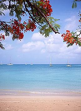 En 2004, la Martinique a dépassé le cap des 500000 touristes avec plus de 515000 visiteurs contre 492000 l'année précédente, soit une croissance de 4,6%.