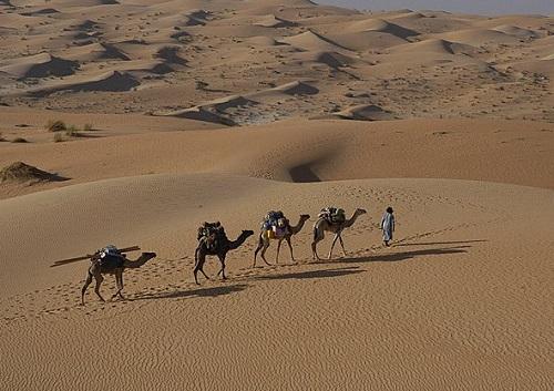 En Mauritanie 3 idées de voyage s'affichent sur le site dont une randonnée en chameaux de Chinguetti aux sources de Tergit - Photo Evaneos
