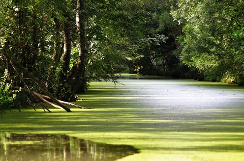 EDEN 2010 : le Grand Site du Marais Poitevin reçoit le prix d'excellence 2010