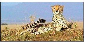 Cet été ou cet automne, offrez les safaris Tanzanie d'Exception à vos clients d'exception... !