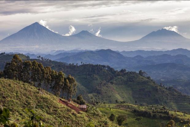 Le parc national des volcans, au nord du pays, à la frontière avec l'Ouganda et la République Démocratique du Congo, abrite les gorilles. - Evaneos