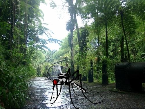 """Martinique : """"La dengue ne doit pas compromettre la saison hiver !"""""""