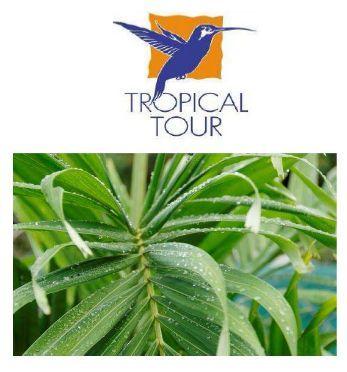 Tropical Tour vous propose cette semaine le circuit découverte «Méli Mélo» de 8  jours / 7 nuits en Guadeloupe à partir de 699 euros par personne.