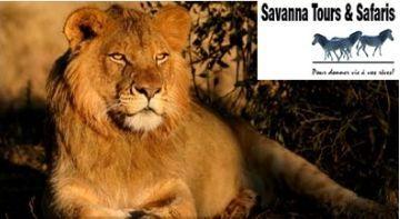 Savanna Tours & Safaris : Programme Afrique du Sud groupes 10 jours 2011 au départ de France et de Belgique