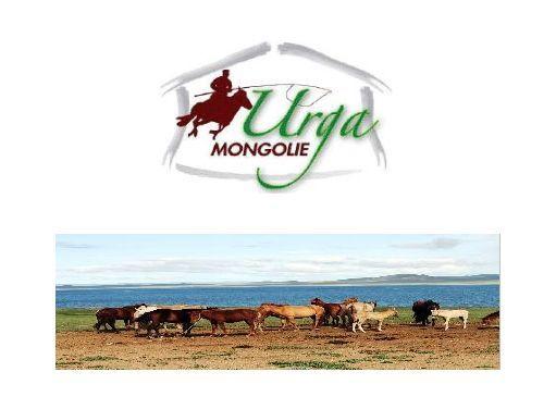 Urga Mongolie : Venez découvrir les splendeurs de la Mongolie, que ce soit à pieds, à cheval ou en voiture