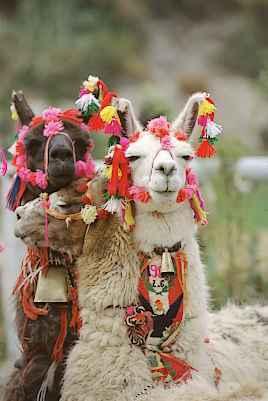 Les équipes du Groupe Gaston Sacaze Pérou, Argentine, Chili, Bolivie et Equateur vous souhaitent de joyeuses fêtes de Noël  et une bonne année 2011