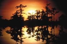 Clair de lune sur le Bayou