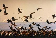 Grippe aviaire : pas d'affolement dans les résa