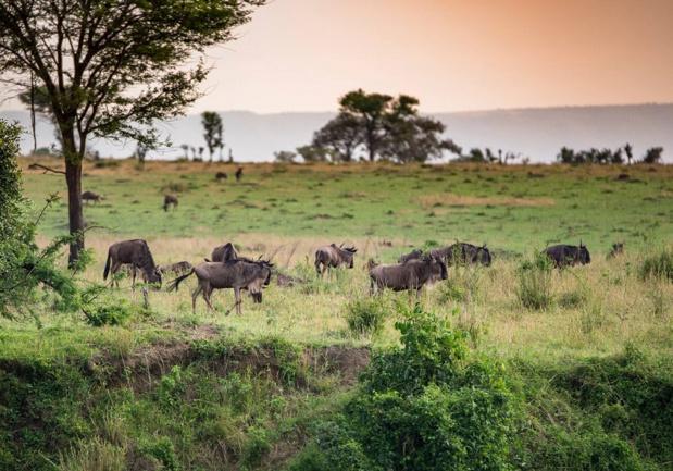 Toutes les espèces de l'Afrique de l'Est sont là, réunies sur les 100 000 km2 de parcs nationaux tanzaniens - Photo Tanganyika