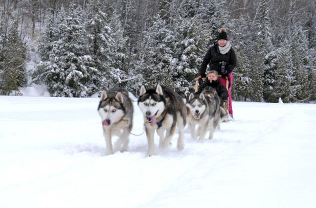 Initiation chiens de traîneau © TourMaG