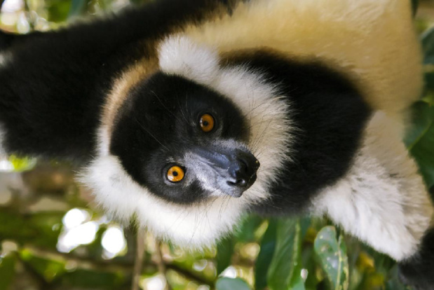 L'ONTM sera également accompagné des représentants de b[5 réceptifs malgaches]b qui présenteront leurs séjours. Seront présents : b[Omee Voyages, Jacaranda de Madagascar, Silver Wings Travel & Tours, Voyages Bourdon et Discover Madagascar - DR