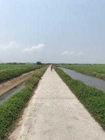 Autour de Hoi An, excursion en vélo au milieu des rizières © PG Tourmag