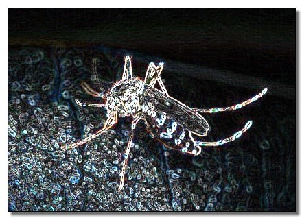 Chikungunya : Maurice piquée au vif…
