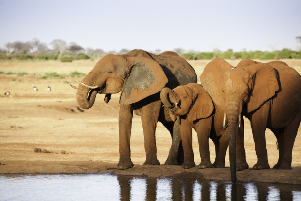Depuis notre création, plus de 420 000 voyageurs (italiens, espagnols, français, belges, suisses, canadiens ) ont découvert l'Afrique sud-saharienne. /crédit deposit-photo