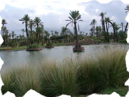 100 000 palmiers par an pour Marrakech
