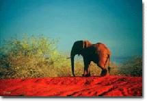 Eléphant à Taita / Olivier Trompette