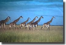 Kenya : 831 959 visiteurs en 2005