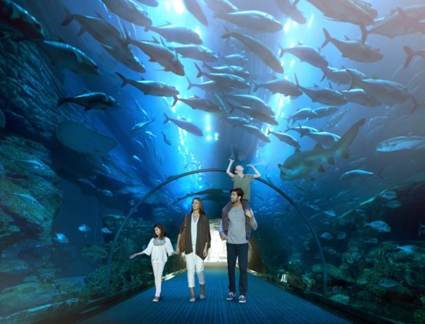 Le tunnel des requins à Dubaï - DR Emirates